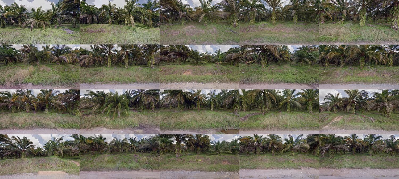 Indonesia. Palme da olio, Chiara Ferrin