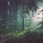 aspis nuove antiche foreste simbiosi mocu modena cultura